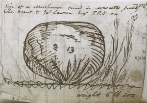 Sketch of puffball from the archive of Boulton and Watt