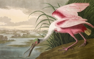 J.J. Audubon's Birds of America
