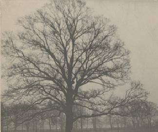 Tree WKH5206