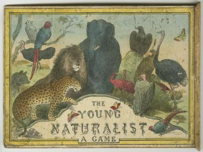 The Young Naturalist, Parker Collection [087.1/098]
