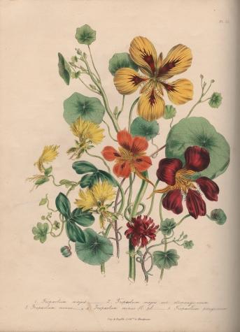 The Ladies' Flower-Garden of Ornamental Annuals JL58